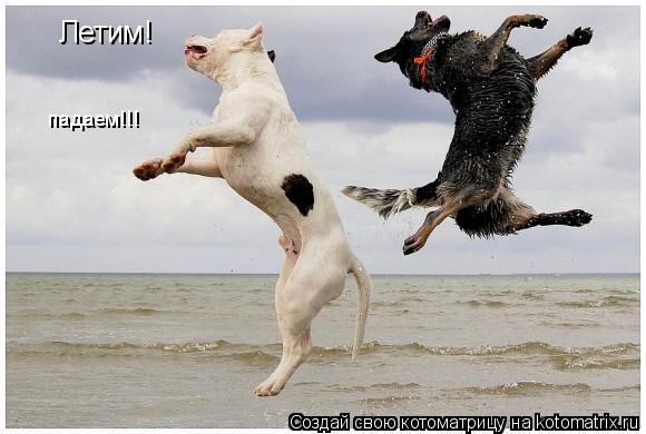 Котоматрица: Летим! падаем!!!