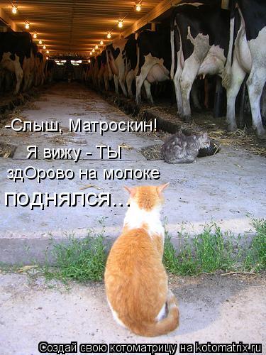 Котоматрица: -Слыш, Матроскин! Я вижу - ТЫ здОрово на молоке поднялся...