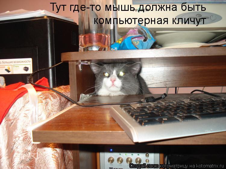 Котоматрица: Тут где-то мышь должна быть компьютерная кличут