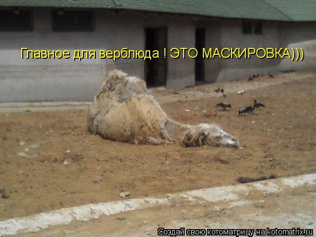 Котоматрица: Главное для верблюда ! ЭТО МАСКИРОВКА)))