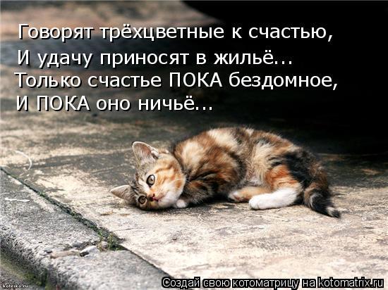 Котоматрица: Говорят трёхцветные к счастью, И удачу приносят в жильё... Только счастье ПОКА бездомное, И ПОКА оно ничьё...