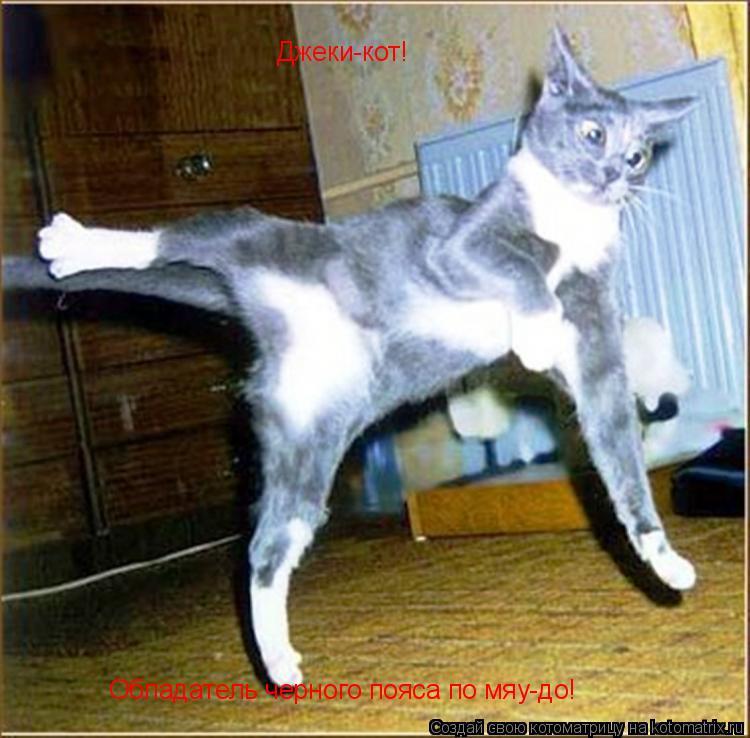 Котоматрица: Джеки-кот! Джеки-кот! Обладатель черного пояса по мяу-до!