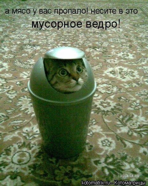 Котоматрица: а мясо у вас пропало! несите в это мусорное ведро!