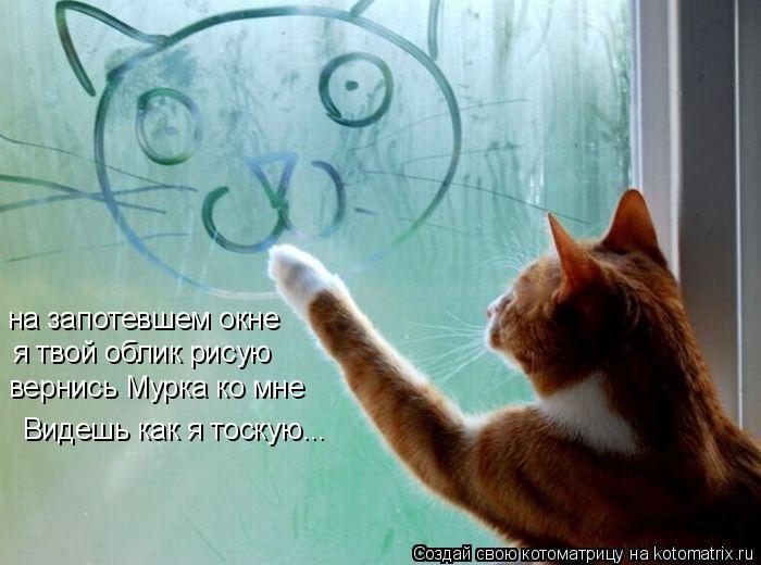 Котоматрица: на запотевшем окне   я твой облик рисую  вернись Мурка ко мне   Видешь как я тоскую...