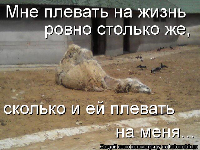 Котоматрица: Мне плевать на жизнь  ровно столько же,  сколько и ей плевать  на меня...
