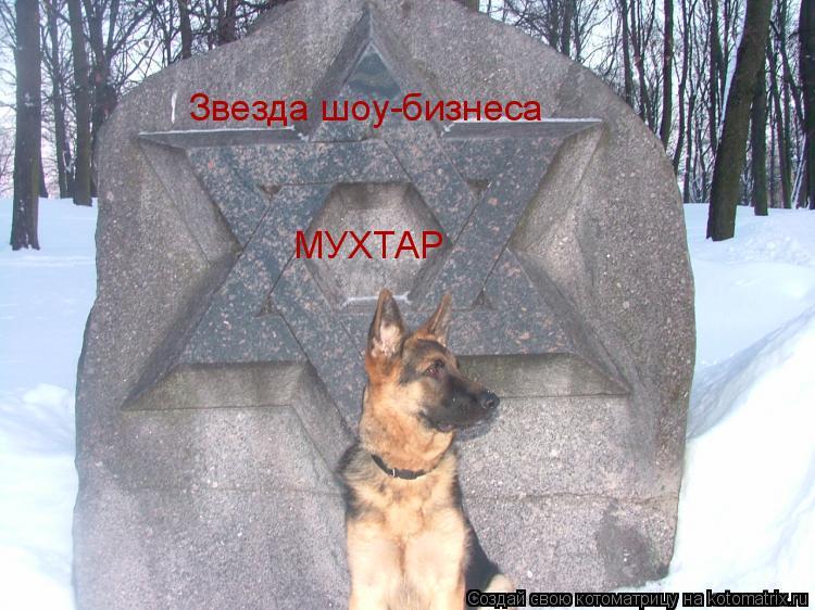 Котоматрица: Звезда шоу-бизнеса МУХТАР