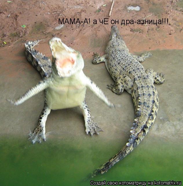 Котоматрица: МАМА-А! а чЕ он дра-азница!!!