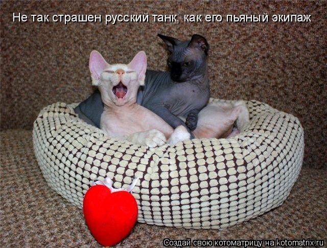Котоматрица: Не так страшен русский танк, как его пьяный экипаж