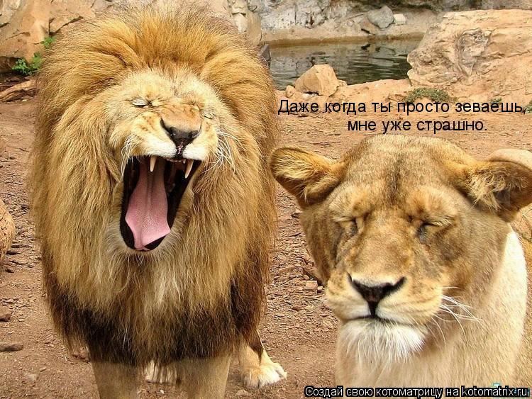 Котоматрица: Даже когда ты просто зеваешь, мне уже страшно.