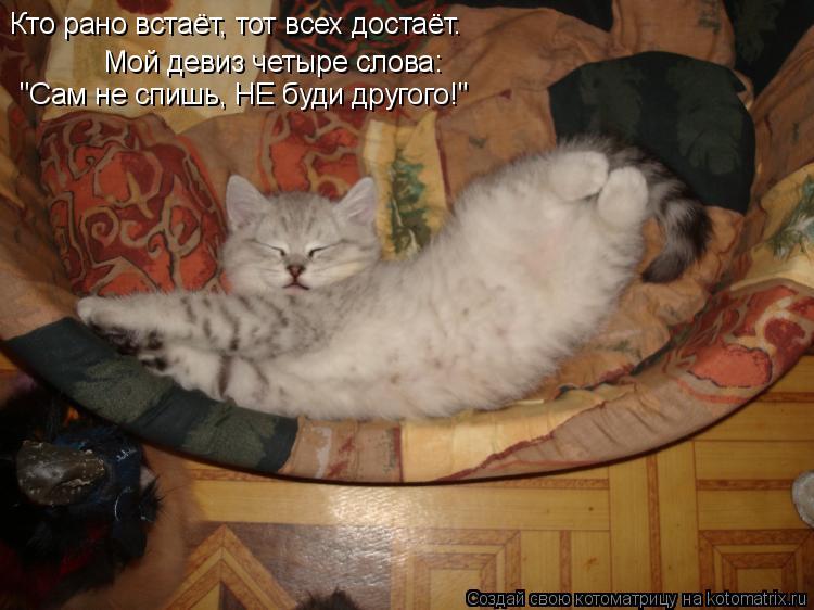 """Котоматрица: Мой девиз четыре слова:  """"Сам не спишь, НЕ буди другого!"""" Кто рано встаёт, тот всех достаёт."""