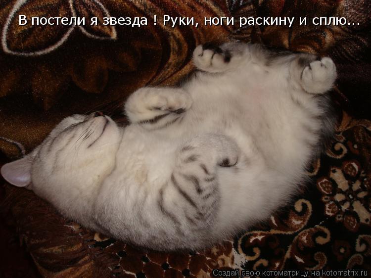 Котоматрица: В постели я звезда ! Руки, ноги раскину и сплю...