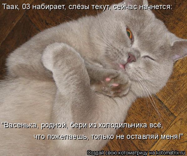 """Котоматрица: Таак, 03 набирает, слёзы текут, сейчас начнется: """"Васенька, родной, бери из холодильника всё, что пожелаешь, только не оставляй меня!"""""""