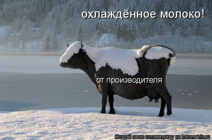 Котоматрица: охлаждённое молоко! от производителя