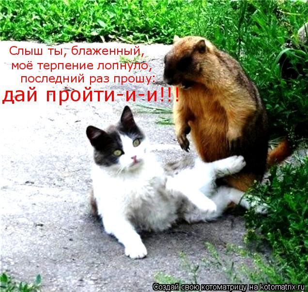 Котоматрица: Слыш ты, блаженный,  моё терпение лопнуло,   последний раз прошу   : дай пройти-и-и!!!