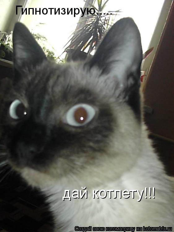 Котоматрица: Гипнотизирую..... дай котлету!!!