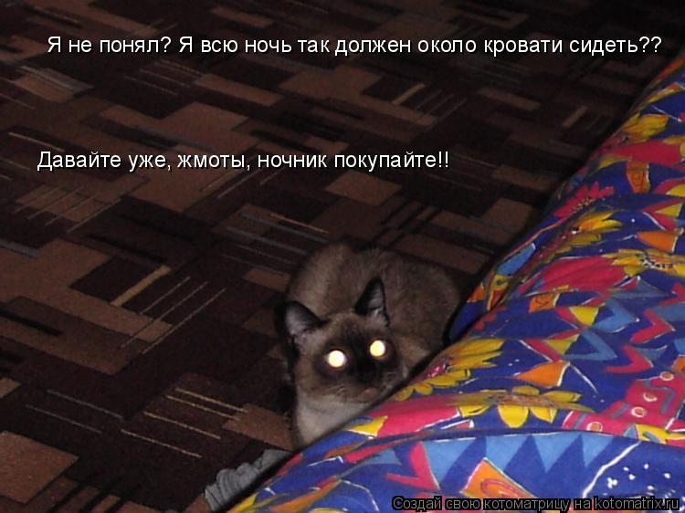 Котоматрица: Я не понял? Я всю ночь так должен около кровати сидеть??  Давайте уже, жмоты, ночник покупайте!!
