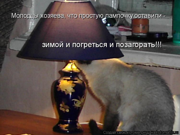 Котоматрица: Молодцы хозяева, что простую лампочку оставили -  зимой и погреться и позагорать!!!