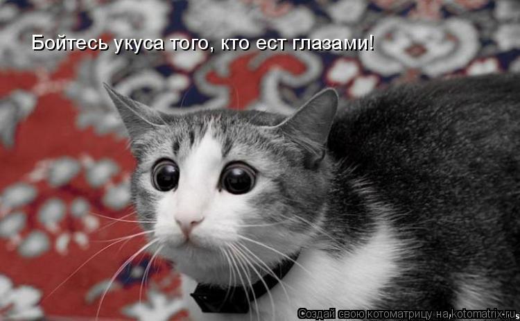 Котоматрица: Бойтесь укуса того, кто ест глазами!