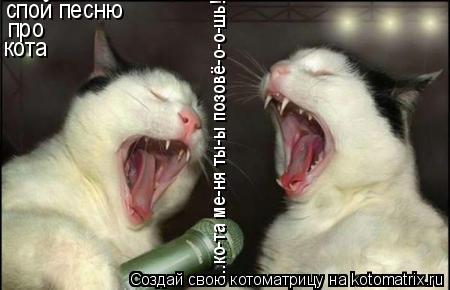 Котоматрица: спой песню про кота ...ко-та ме-ня ты-ы позовё-о-о-шь!...