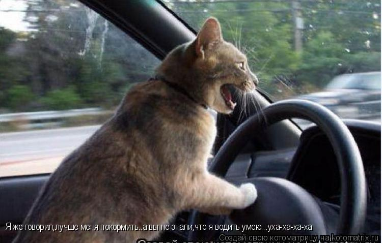 Котоматрица: Я же говорил,лучше меня покормить..а вы не знали,что я водить умею...уха-ха-ха-ха
