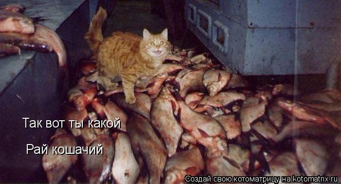 Котоматрица: Так вот ты какой Рай кошачий