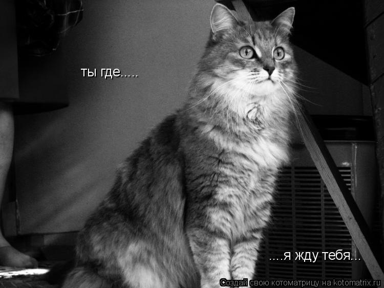 Котоматрица: ты где..... ....я жду тебя...