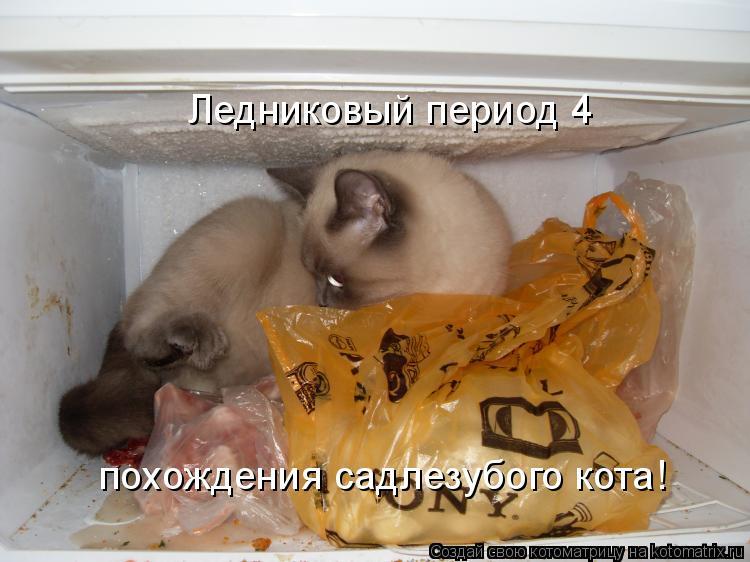 Котоматрица: Ледниковый период 4 похождения садлезубого кота!
