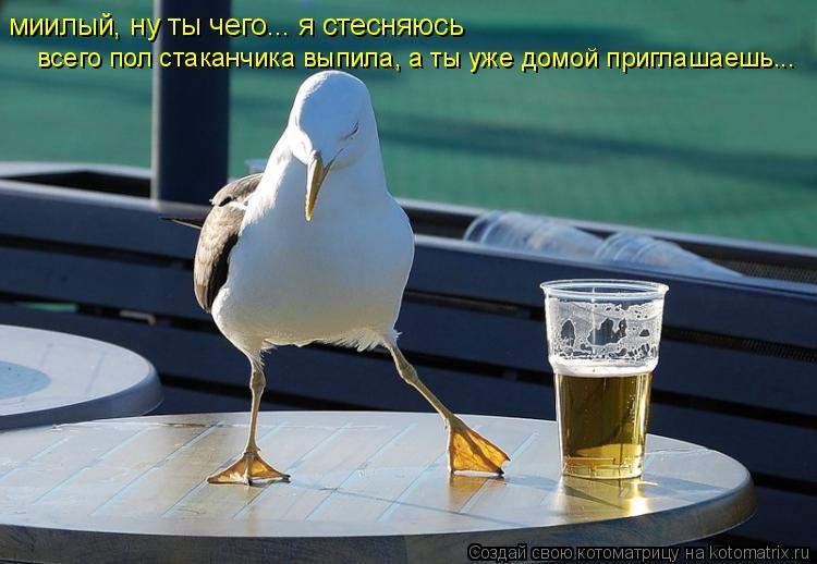 Котоматрица: миилый, ну ты чего... я стесняюсь всего пол стаканчика выпила, а ты уже домой приглашаешь...