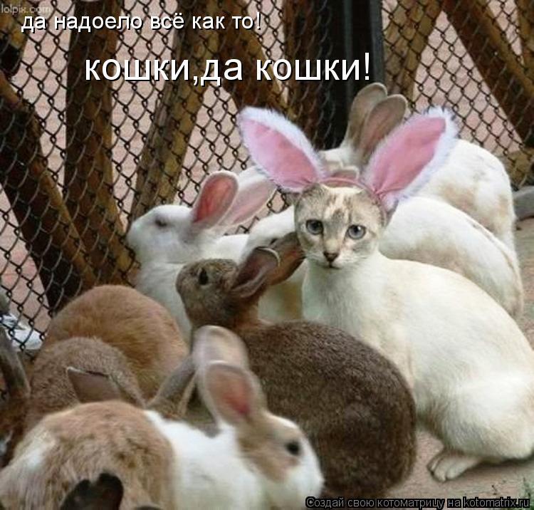Котоматрица: да надоело всё как то!  кошки,да кошки!