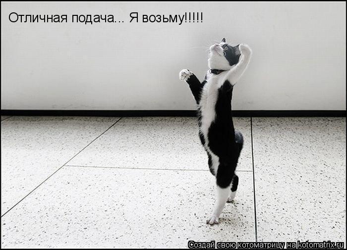 Котоматрица: Отличная подача... Я возьму!!!!! Отличная подача... Я возьму!!!!!