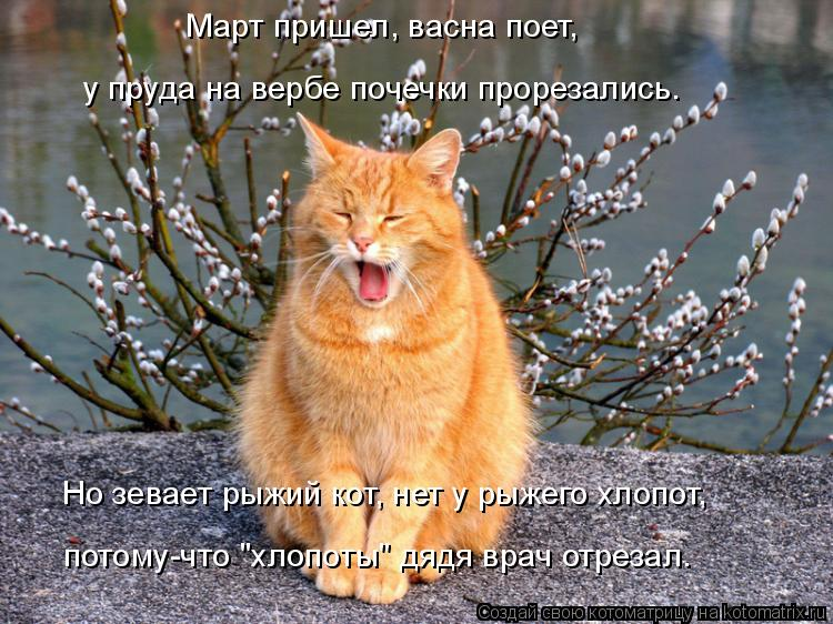 """Котоматрица: Март пришел, васна поет, Но зевает рыжий кот, нет у рыжего хлопот, у пруда на вербе почечки прорезались. потому-что """"хлопоты"""" дядя врач отреза"""