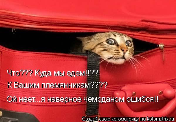 Котоматрица: Что??? Куда мы едем!!?? К Вашим племянникам???? Ой неет...я наверное чемоданом ошибся!!