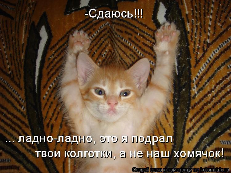 Котоматрица: -Сдаюсь!!! ... ладно-ладно, это я подрал  твои колготки, а не наш хомячок!