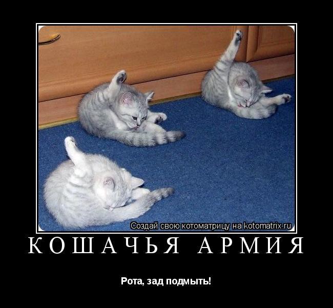 Котоматрица: Кошачья армия Рота, зад подмыть!