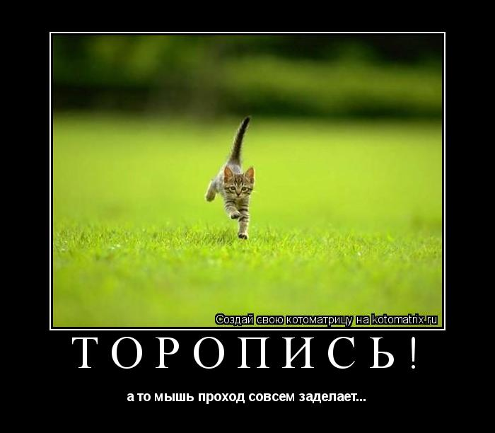 Котоматрица: Торопись! а то мышь проход совсем заделает...