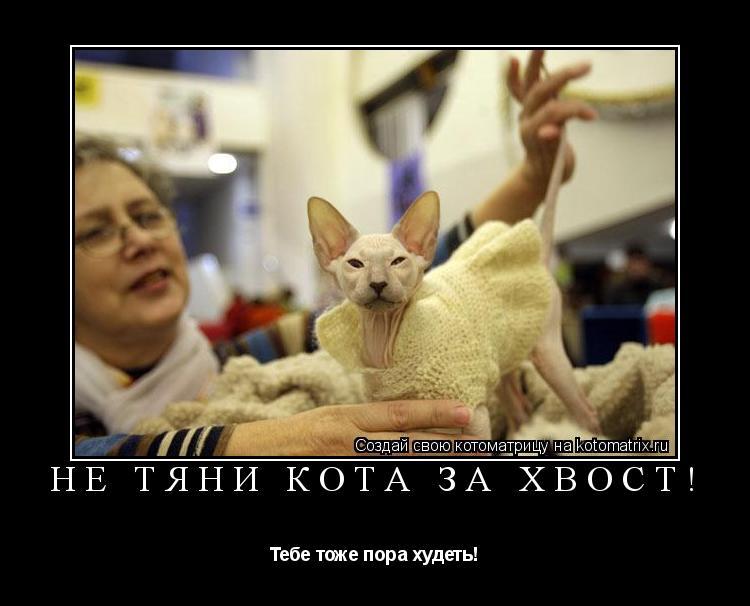 Котоматрица: Не тяни кота за хвост! Тебе тоже пора худеть!