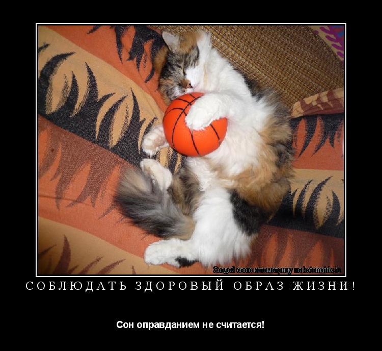 Котоматрица: Соблюдать здоровый образ жизни! Сон оправданием не считается!