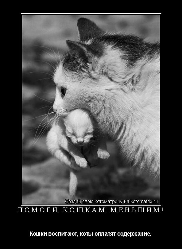 Котоматрица: Помоги кошкам меньшим! Кошки воспитают, коты оплатят содержание.