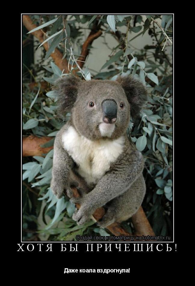 Котоматрица: Хотя бы причешись! Даже коала вздрогнула!