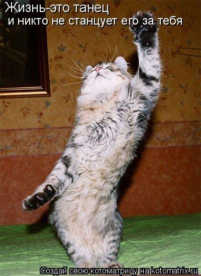 Котоматрица: Жизнь-это танец  и никто не станцует его за тебя