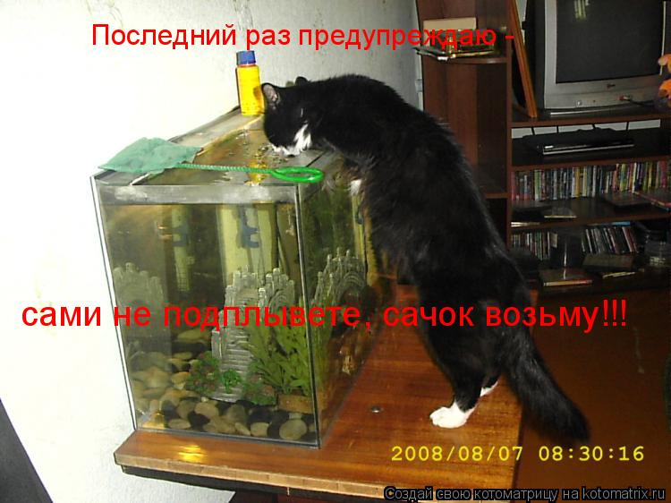 Котоматрица: Последний раз предупреждаю - сами не подплывете, сачок возьму!!!