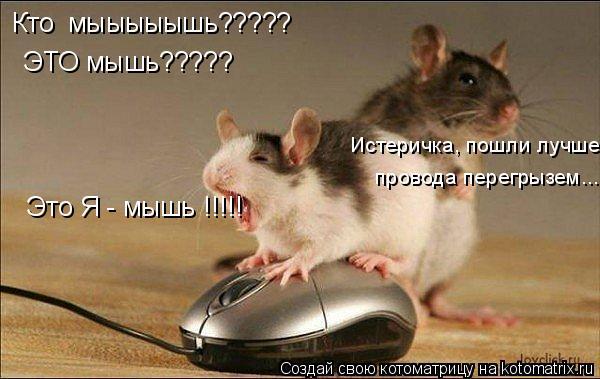 Котоматрица: Кто  мыыыыышь????? ЭТО мышь????? Это Я - мышь !!!!! Истеричка, пошли лучше  провода перегрызем...