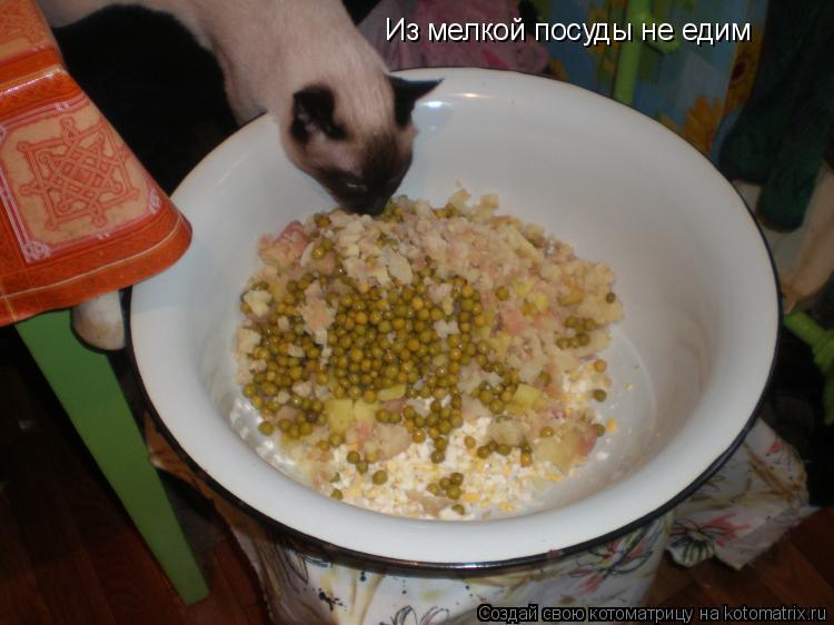 Котоматрица: Из мелкой посуды не едим