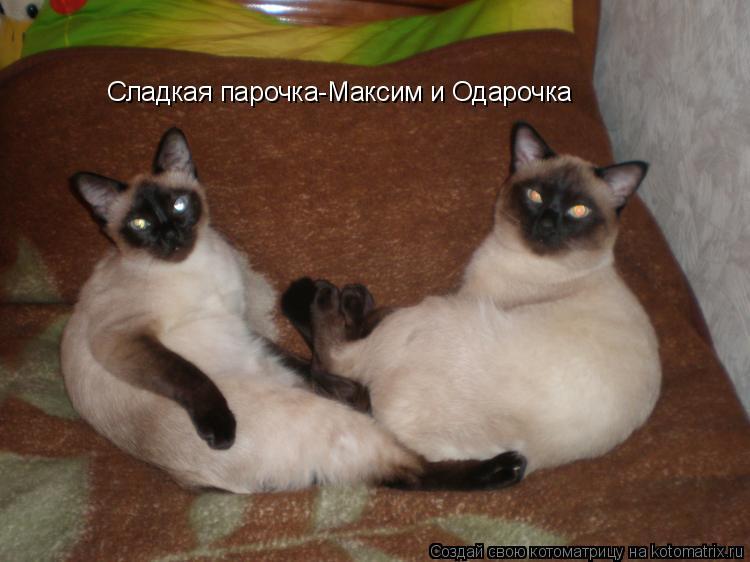 Котоматрица: Сладкая парочка-Максим и Одарочка