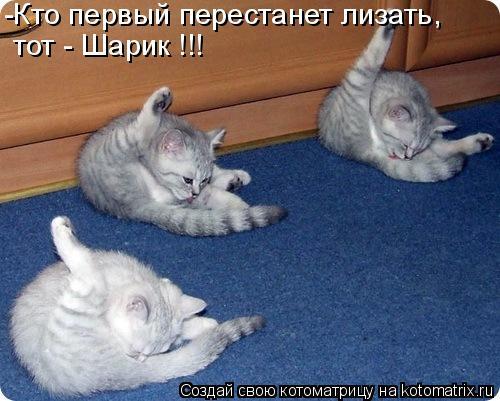 Котоматрица: -Кто первый перестанет лизать, тот - Шарик !!!