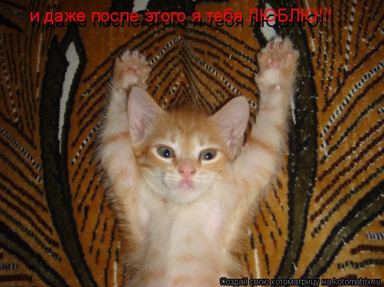 Котоматрица: и даже после этого я тебя ЛЮБЛЮ!!! и даже после этого я тебя ЛЮБЛЮ!!!