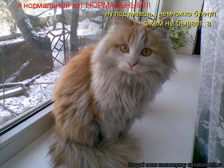 Котоматрица: я нормальный кот НОРМАЛЬНЫЙ!!! ну подумаешь , немножко бухнул с кем не бывает, а