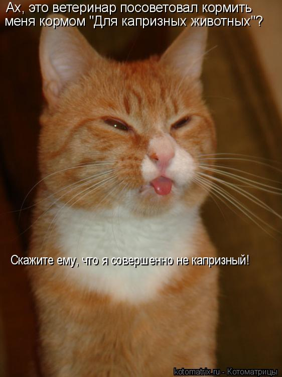 """Котоматрица: Ах, это ветеринар посоветовал кормить меня кормом """"Для капризных животных""""? Скажите ему, что я совершенно не капризный!"""