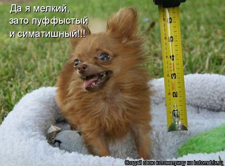 Котоматрица: Да я мелкий, зато пуффыстый и симатишный!!!