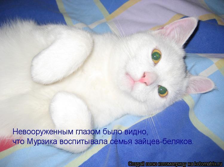 Котоматрица: Невооруженным глазом было видно, что Мурзика воспитывала семья зайцев-беляков.